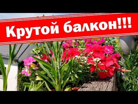 Крутой балкон, выращиваем цветы на балконе. Розы, клематисы, пассифлора, петунии, алиссум