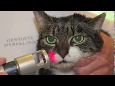 Laserbehandling til kæledyr