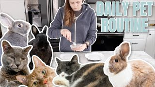 DAILY PET CARE ROUTINE