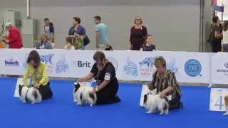 Японский хин на WDS 2016. Japanese Chin World Dog Show 2016.