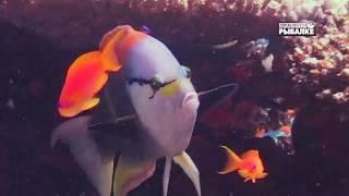КРАСОТА КОРАЛЛОВ О чём молчат рыбы 77
