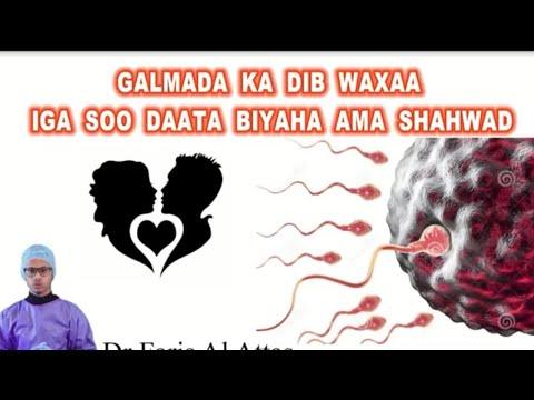 DAAWO Galmada Subaxi arooti lasuubiyo waxe ka macaantahay tan habeenki thumbnail