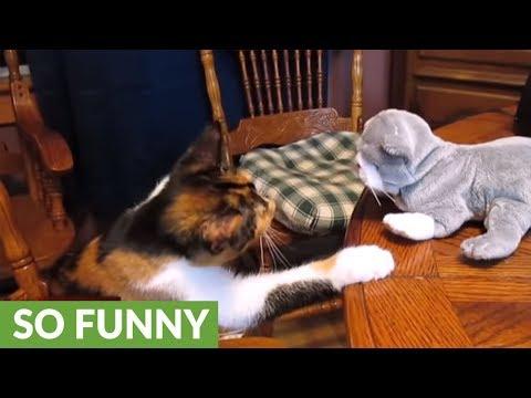 """Kung fu kitten battles """"threatening"""" stuffed animal"""