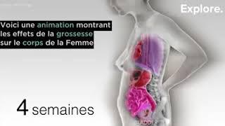L'effet du grossesse sur le corps de la mère