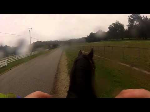 Michelle horseback riding (2)