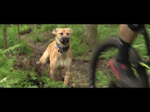 Flow the Trail Dog - Third Wheel