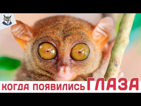Вопрос: Существуют ли животные с НЕчетным количеством глаз?