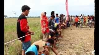 2015 Balap motor tassi  balap gabah pesta panen di sulawesi selatan