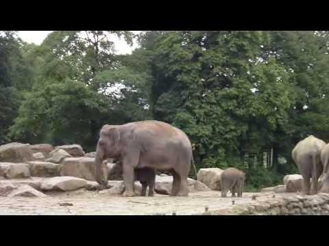 Zoo Emmen (NL)- Rundgang