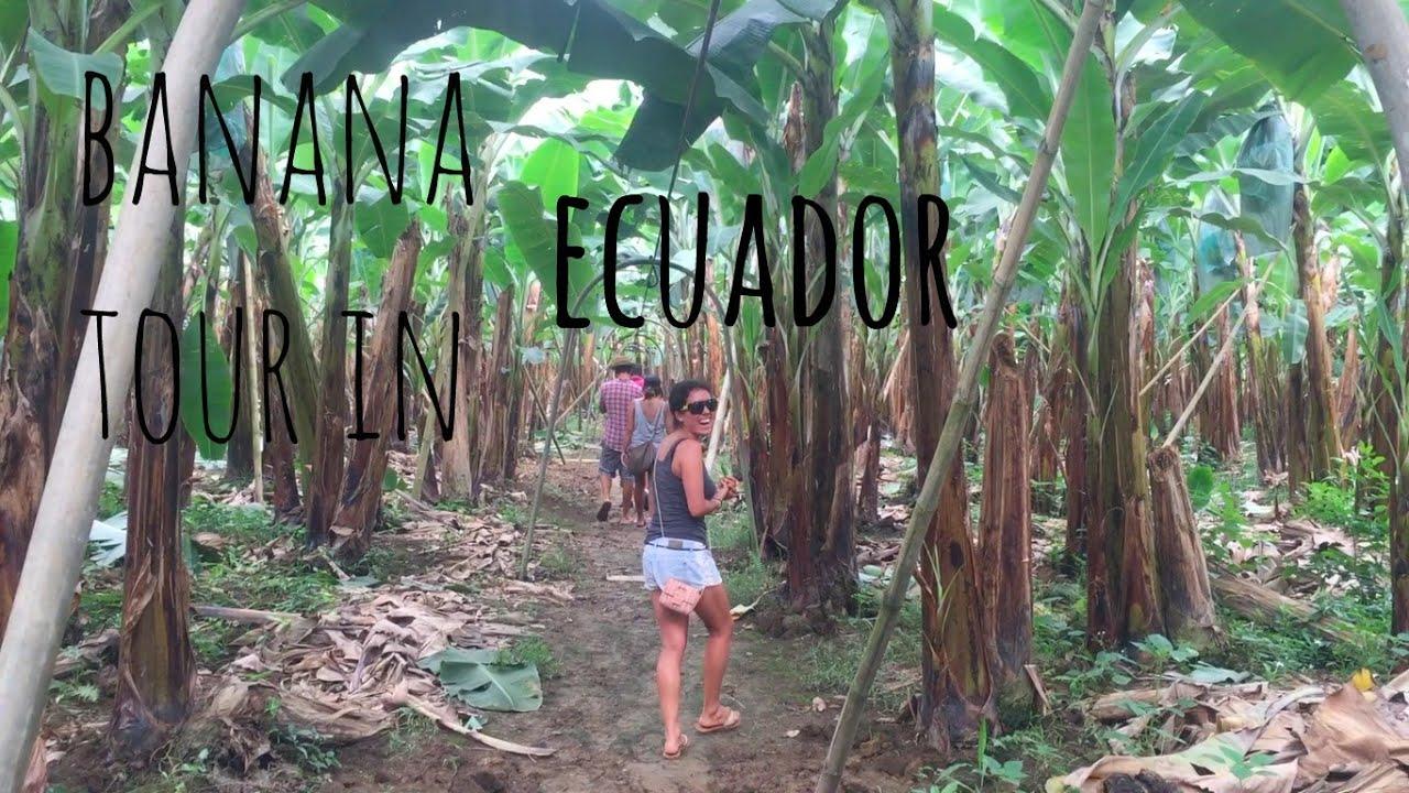 the popular music in ecuador