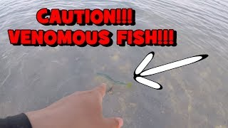 CAUTION! A DANGEROUS Fish Appears! (Fishing the John's Pass)