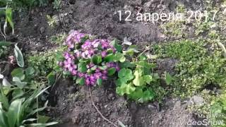 Цветы и их названия.