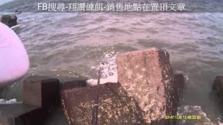 電話來了魚就來了鹿北小水箭&斜坡黑鯛1斤翔讚練餌釣魚實況-015