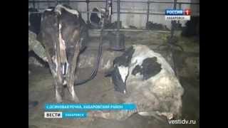 Вести-Хабаровск. В сельхозпредприятии