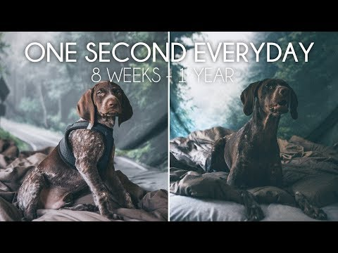 Floyd the German Shorthaired Pointer Puppy Growing Up (8 Weeks to 1 Year)   One Second Everyday