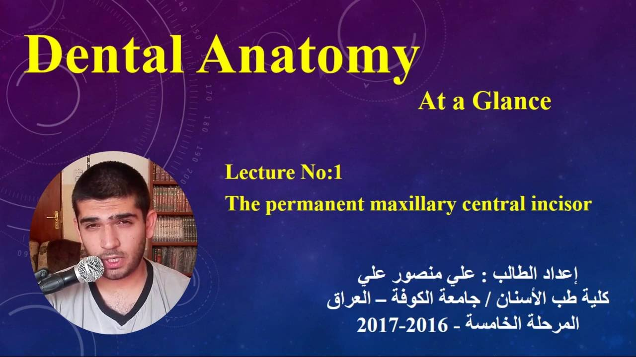 Dental Anatomy At A Glance Lec 1 Maxillary Central Incisor Youtube