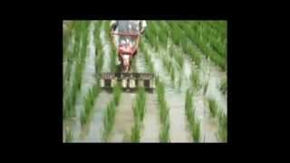 Paddy Power Weeder | Wet Land Weeder | TNAU Approved Weeder |  Encore Agri Tech