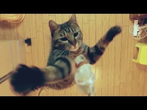 Cat Jumps Super High In Slow Motion