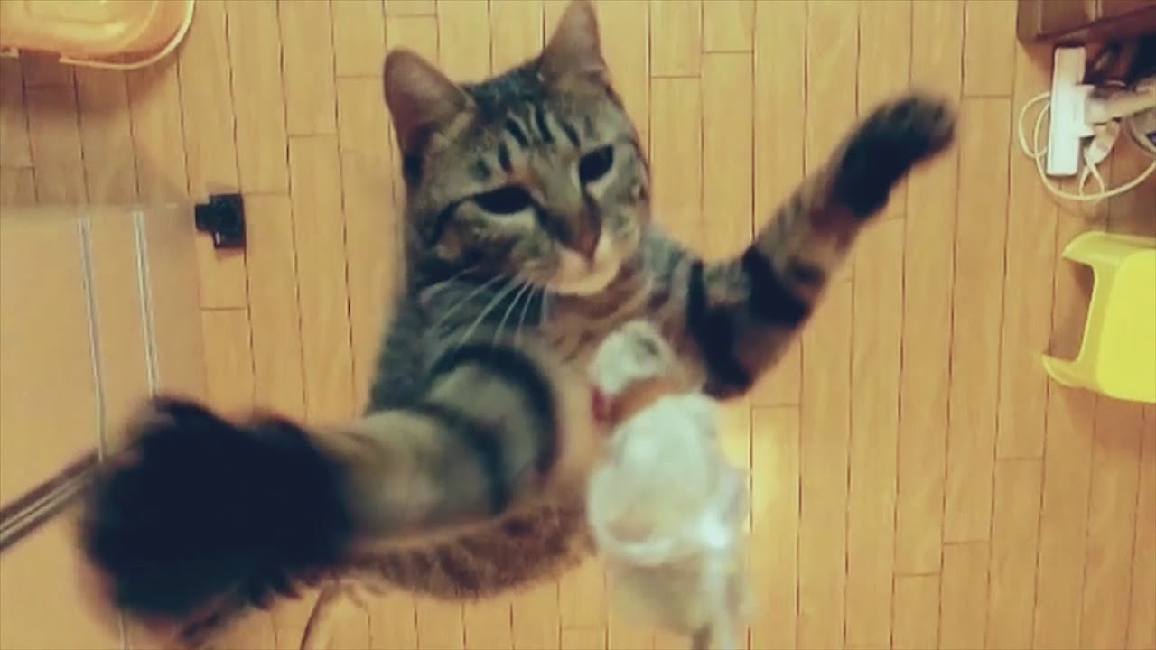 Image result for cat jumping at height
