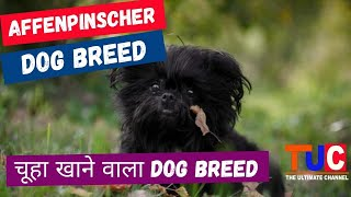 Affenpinscher Dog Breed  History, Personality, Care, Health and Facts | Know your Dog Breed | TUC