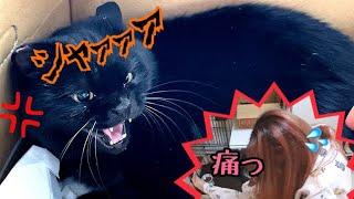 保護した黒猫に顔面攻撃されて傷ができました…