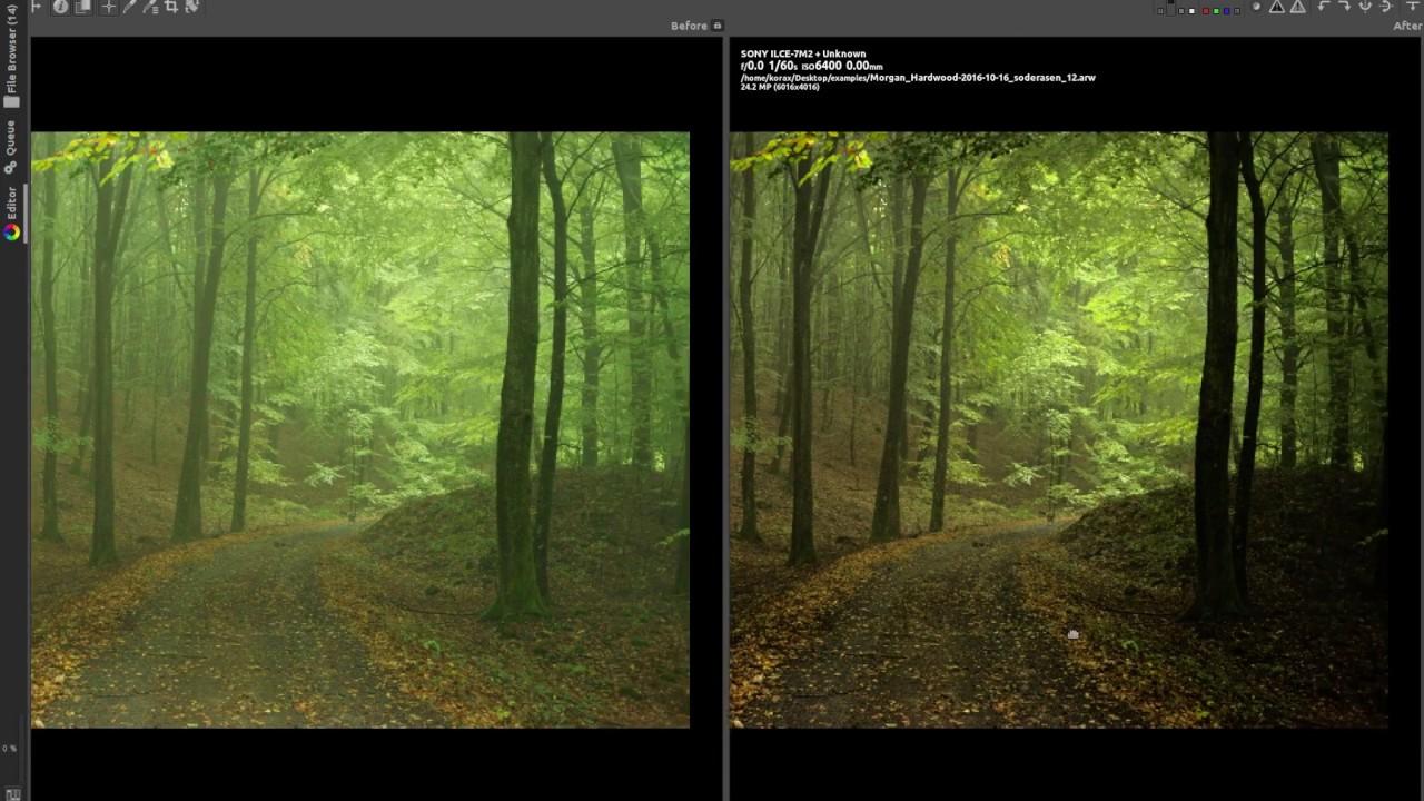 Processing high ISO images with RawTherapee - Deep Forest