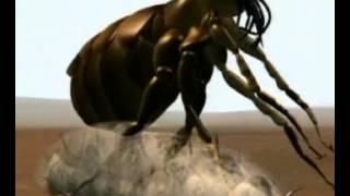 a parazita ostorférgek kezelése
