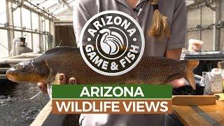 Episode 9 - 2018/2019 Arizona Wildlife Views Television
