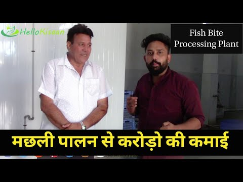 Fish Processing Plant || Frozen Fish Chips || Hello Kisaan