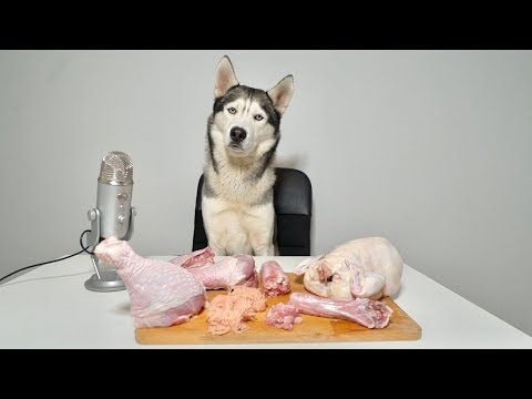 ASMR Husky Reviewing RAW Turkey Meat Parts!