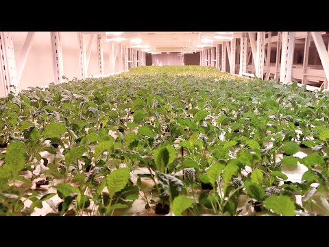 The Healthy Butcher visits Aqua Greens: The Future of Urban Agriculture