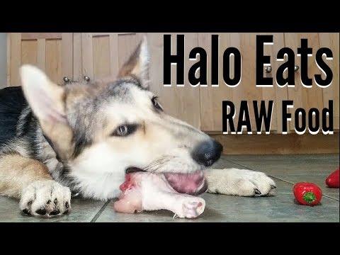 Baby And German Shepherd Fight Over Food