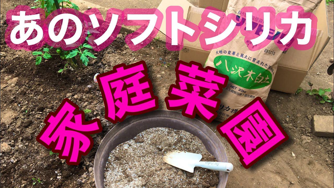 【家庭菜園#06】ソフトシリカ知ってますか?お試し!【究極肥料】