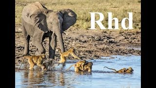 Baboons and Elephants of Chobe River,  Nature 2018 full HD Documentary.
