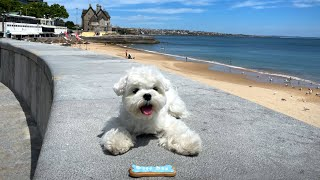 CUTE MALTESE PUPPY WANTS TO GO HOME