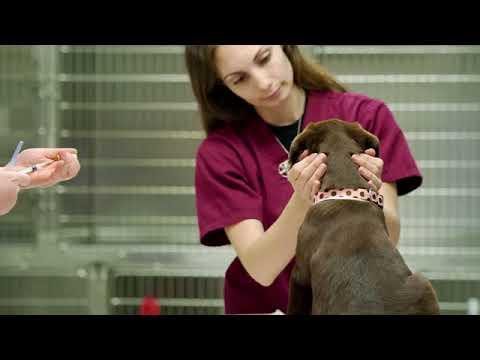 Companion Pet Clinic-Salmon Creek Vancouver WA 98685