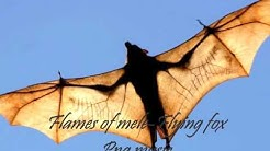flames of mele- flying fox (PNG music)