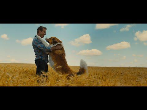 再見亦是狗朋友 2 (A Dog's Journey)電影預告