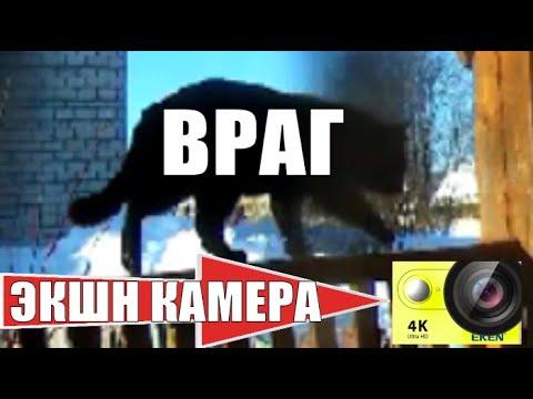 Кот Чернуха гулял с экшн камерой и встретил лютого врага / cat walks with camera and met the enemy
