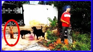 Ghost Makes A Dog Behave Strangely | Top 5 Paranormal Events Witnessed | Scary Viral Ghost  Videos