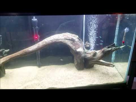 How I Lower Aquarium PH