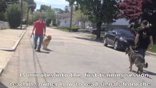 Aggressive Dog Rehab- Solid K9 Training