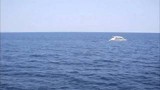 Abel Nagengast   Aegean Sea
