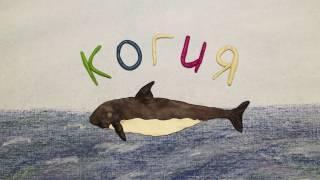 Когия или карликовый кашалот. Kogia breviceps.  Пластилиновый познавательный мультфильм.