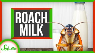 How to Milk a Cockroach