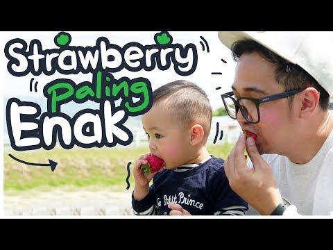 BERBURU STRAWBERRY TERENAK DI DUNIA!! [ Japan Vlog ]
