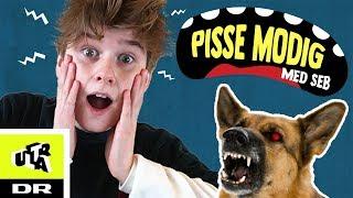 Pissemodig med Seb: Hundeskræk | Ultra