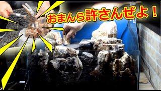 エビのテラリウム水槽立ち上げ!石を砕いて滝を制作!?【苔リウム立ち上げpart3】