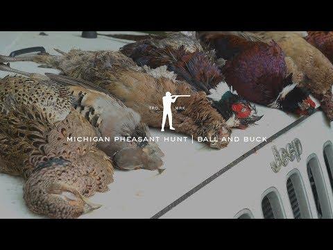 Pheasant Hunting In Michigan