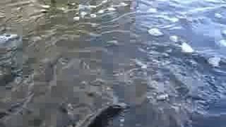 Trout fishing in Dundas Ontario